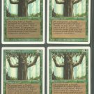 Ironroot Treefolk x4 - NM - Revised - Magic the Gathering