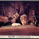 WILLARD ~- Original '71 Horror Movie Photo ~ BRUCE DAVIDSON with RAT
