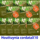 Houttuynia cordata face mask pack 10 sheets