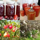 HEIRLOOM NON GMO Wild Plum Tree 5 seeds