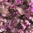 HEIRLOOM NON GMO Aromatto Basil 100 seeds