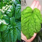 HEIRLOOM NON GMO Mammoth Basil 100 seeds