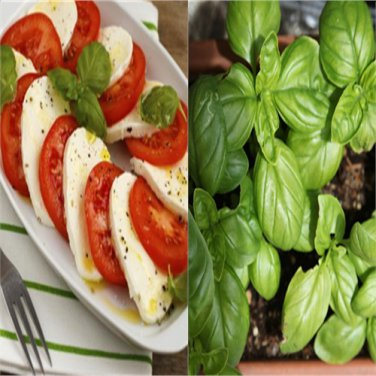 HEIRLOOM NON GMO Mozzerella Basil 100 seeds