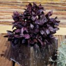 HEIRLOOM NON GMO Dwarf Purple Delight Basil 100 seeds