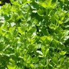 HEIRLOOM NON GMO Cutting Celery 100 seeds