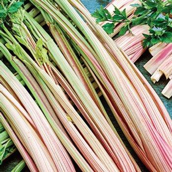 HEIRLOOM NON GMO Peppermint Celery 25 seeds