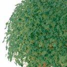 HEIRLOOM NON GMO Chia 2000 seeds