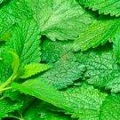 HEIRLOOM NON GMO Citronella Balm 25 seeds