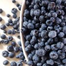 HEIRLOOM NON GMO Highbush Blueberry 50 seeds