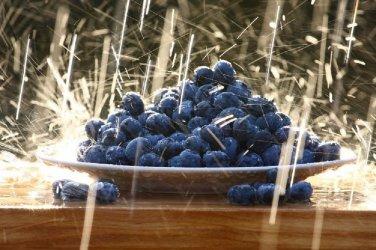 HEIRLOOM NON GMO Dwarf Blueberry 50 seeds