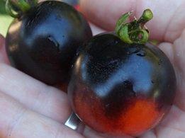 HEIRLOOM NON GMO Indigo Apple Tomato 25 seeds