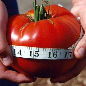HEIRLOOM NON GMO Delicious Tomato 25 seeds
