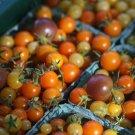 HEIRLOOM NON GMO Cherry Tomato Mix/Blend 25 seeds