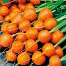 HEIRLOOM NON GMO No Slice Parisian Carrot 100 seeds