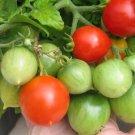 HEIRLOOM NON GMO Geranium Kiss Tomato 25 seeds