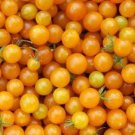 HEIRLOOM NON GMO Gold Currant Tomato 25 seeds