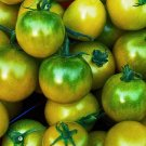 HEIRLOOM NON GMO Green Gage Tomato 25 seeds