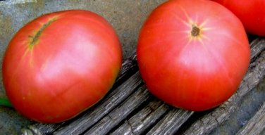 HEIRLOOM NON GMO Ozark Beauty Pink Tomato 25 seeds