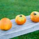 HEIRLOOM NON GMO Granny Cantrell German Tomato 25 seeds