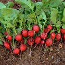 HEIRLOOM NON GMO Cherry Belle Radish 100 seeds