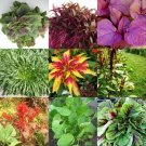 HEIRLOOM NON GMO Chinese Spinach Mix 50 seeds