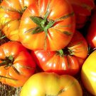 HEIRLOOM NON GMO Hillbilly Tomato 25 seeds (RARE)