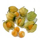 HEIRLOOM NON GMO Cape Gooseberry 50 seeds