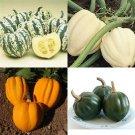 HEIRLOOM NON GMO Acorn Squash Mix 15 seeds