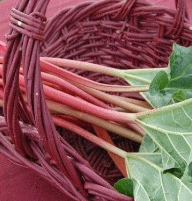 HEIRLOOM NON GMO Victoria Red Rhubarb 10 Seeds
