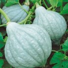 HEIRLOOM NON GMO Blue Hubbard Winter Squash 15 seeds