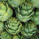 HEIRLOOM NON GMO Green Globe Artichoke 25 seeds