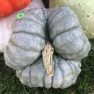 HEIRLOOM NON GMO Triamble Winter Squash 15 seeds