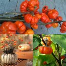 HEIRLOOM NON GMO Pumpkin on a stick 10 seeds