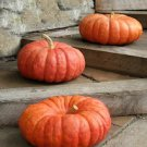 HEIRLOOM NON GMO  Rouge Vif D' Etampes Pumpkin (Cinderella) Winter Squash/Pumpkin 15 seeds