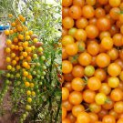 HEIRLOOM NON GMO Gold Rush Currant Tomato 25 seeds