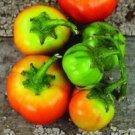 HEIRLOOM NON GMO Cannibal Tomato Eggplant 10 seeds