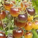 HEIRLOOM NON GMO Golden Blue Berries Tomato 25 seeds