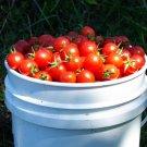 HEIRLOOM NON GMO Chadwick Cherry Tomato 25 seeds