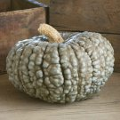 HEIRLOOM NON GMO  Marina Di Chioggia Pumpkin 15 seeds