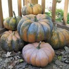 HEIRLOOM NON GMO Musquee De Provence Pumpkin 15 seeds