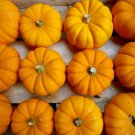 HEIRLOOM NON GMO Jack Be Little Pumpkin 15 seeds