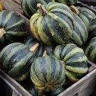 HEIRLOOM NON GMO Mongogo Du Guatemala Squash 15 seeds