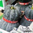 HEIRLOOM NON GMO  Shishigatani Kabocha Squash 15 seeds