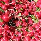 HEIRLOOM NON GMO Scarlet Globe Radish 50 Seeds