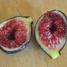 HEIRLOOM NON GMO Black Madeira Fig Tree 10 Seeds