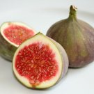 HEIRLOOM NON GMO African Olive Fig Tree 10 Seeds
