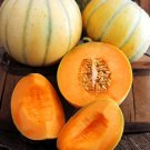 HEIRLOOM NON GMO Charentais Melon 15 Seeds