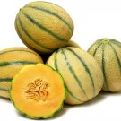 HEIRLOOM NON GMO Tuscany Italian Melon 15 Seeds