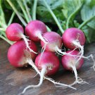 HEIRLOOM NON GMO National 2 Radish 200 Seeds