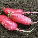 HEIRLOOM NON GMO Misato Rose Radish 200 Seeds
